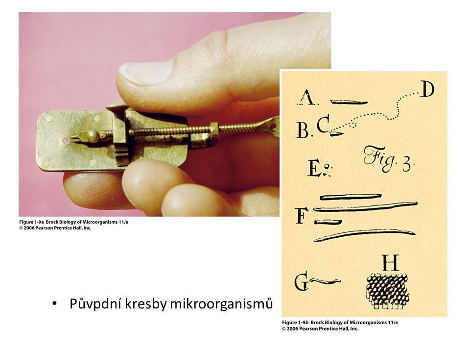 Půvpdní kresby mikroorganismů