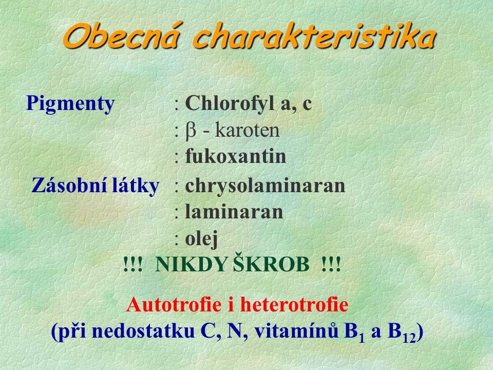 Obecná charakteristika Pigmenty: Chlorofyl a, c :  - karoten : fukoxantin Zásobní látky: chrysolaminaran : laminaran : olej !!.