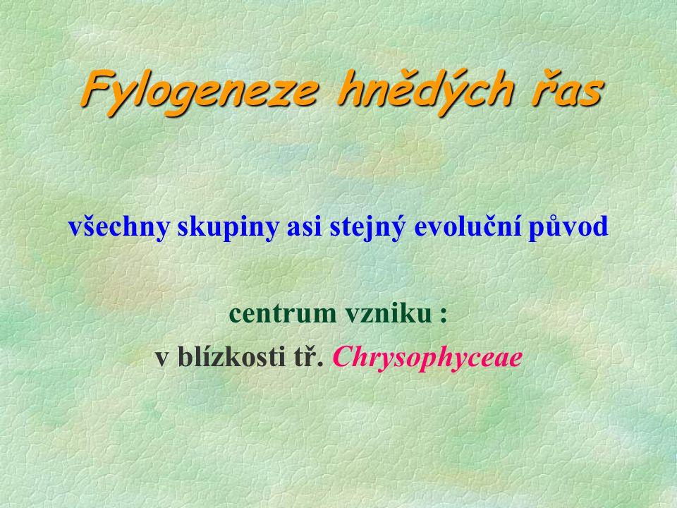 Fylogeneze hnědých řas všechny skupiny asi stejný evoluční původ centrum vzniku : v blízkosti tř.