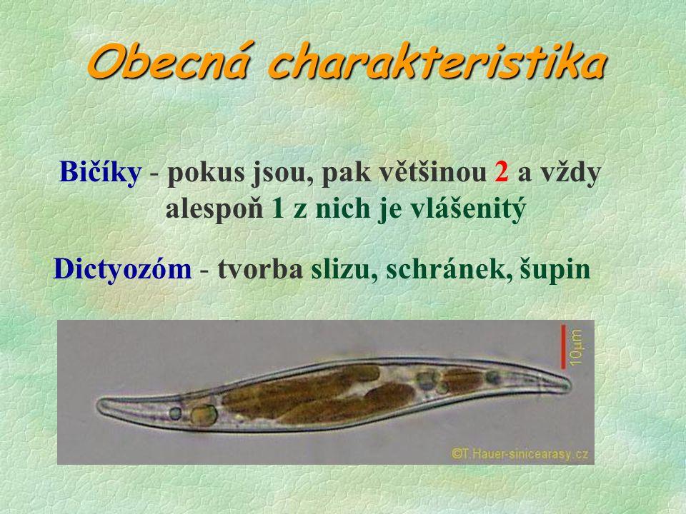 SYSTÉM HNĚDÝCH ŘAS Ze 7 tříd jsou nejdůležitější 4: §CHRYSOPHYCEAE §CHRYSOPHYCEAE (zlativky) §BACILLARIOPHYCEAE §BACILLARIOPHYCEAE (rozsivky) §PHAEOPHYCEAE §PHAEOPHYCEAE (chaluhy) §XANTHOPHYCEAE §XANTHOPHYCEAE (různobrvky)