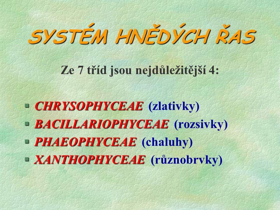 Chrysophyceae §stélka 1-mnohobuněčná §zás.