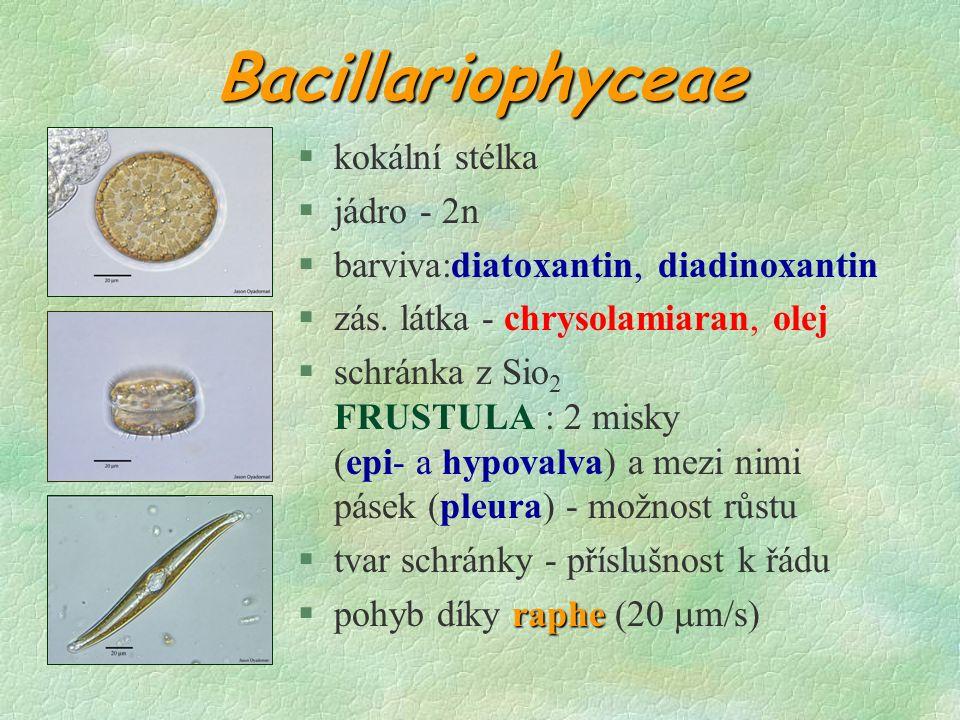 Bacillariophyceae §kokální stélka §jádro - 2n §barviva:diatoxantin, diadinoxantin §zás.