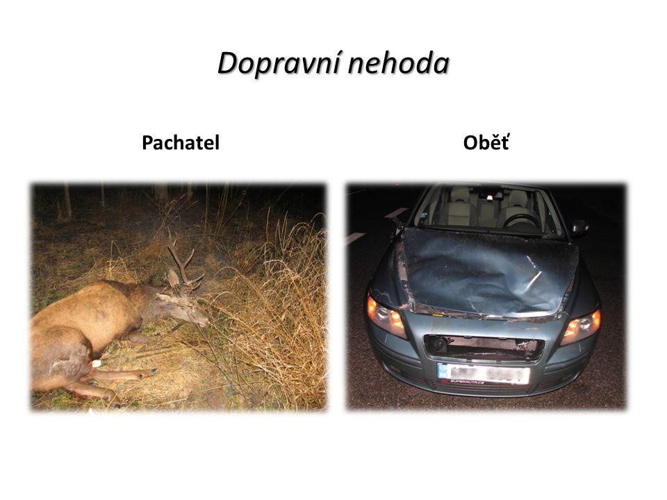 Dopravní nehoda PachatelOběť