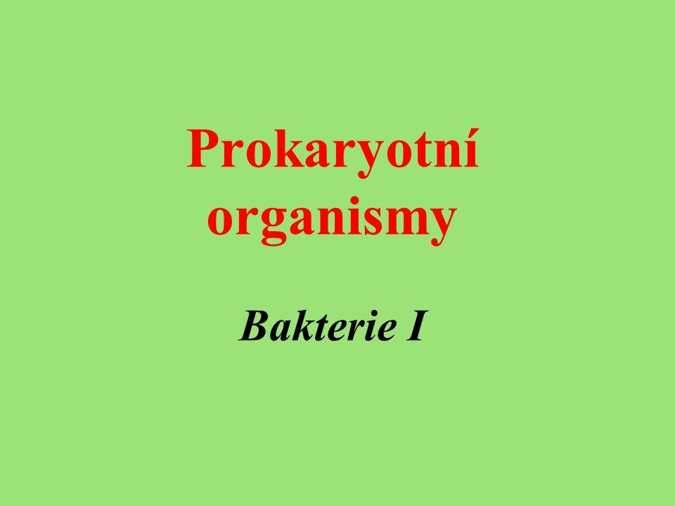 Prokaryotní organismy Bakterie I