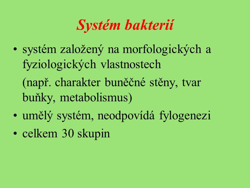 Systém bakterií systém založený na morfologických a fyziologických vlastnostech (např.