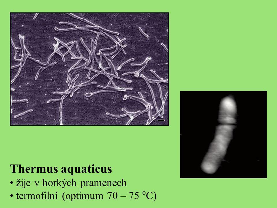 Thermus aquaticus žije v horkých pramenech termofilní (optimum 70 – 75 o C)