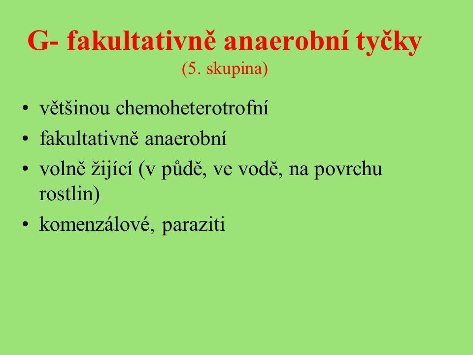 G- fakultativně anaerobní tyčky (5.