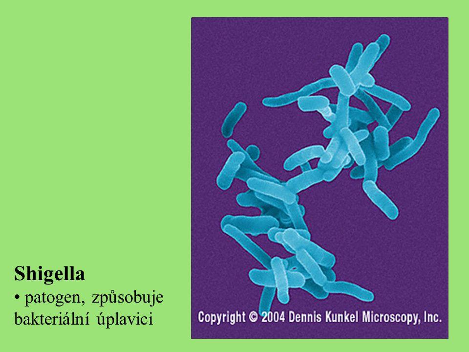 Shigella patogen, způsobuje bakteriální úplavici