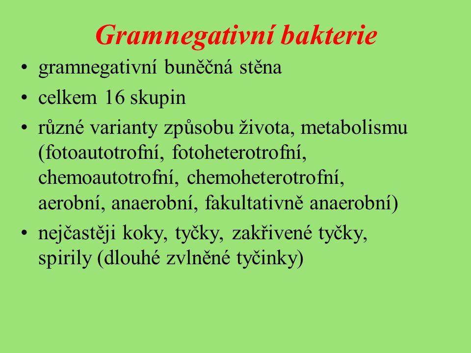 Gramnegativní bakterie gramnegativní buněčná stěna celkem 16 skupin různé varianty způsobu života, metabolismu (fotoautotrofní, fotoheterotrofní, chemoautotrofní, chemoheterotrofní, aerobní, anaerobní, fakultativně anaerobní) nejčastěji koky, tyčky, zakřivené tyčky, spirily (dlouhé zvlněné tyčinky)