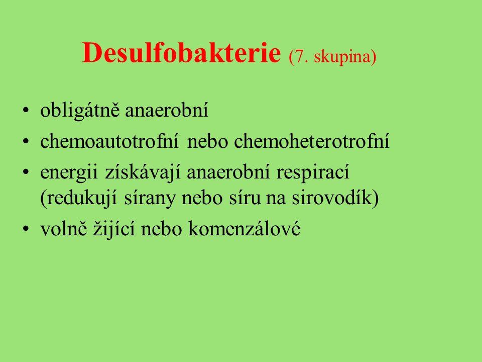 Desulfobakterie (7.