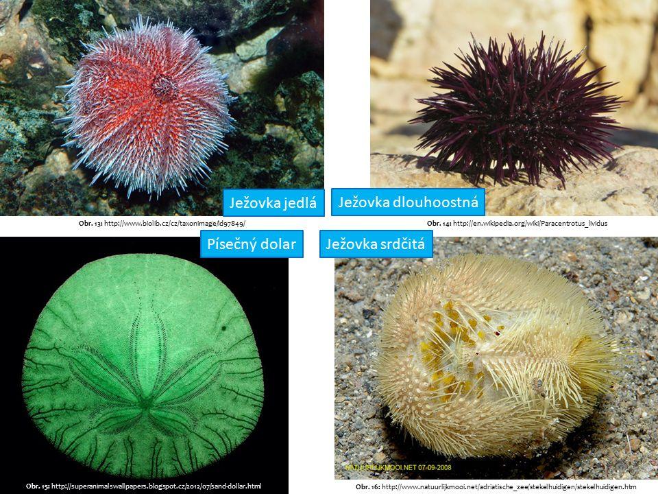 Obr. 13: http://www.biolib.cz/cz/taxonimage/id97849/Obr.