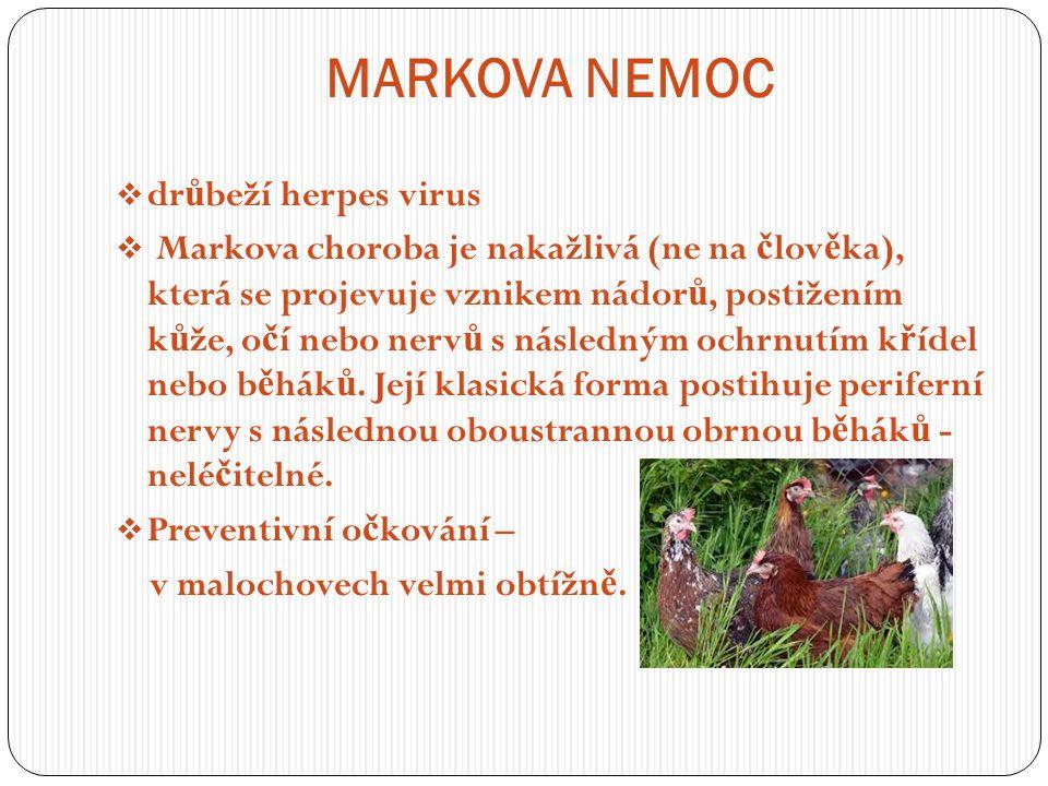 MARKOVA NEMOC  dr ů beží herpes virus  Markova choroba je nakažlivá (ne na č lov ě ka), která se projevuje vznikem nádor ů, postižením k ů že, o č í nebo nerv ů s následným ochrnutím k ř ídel nebo b ě hák ů.