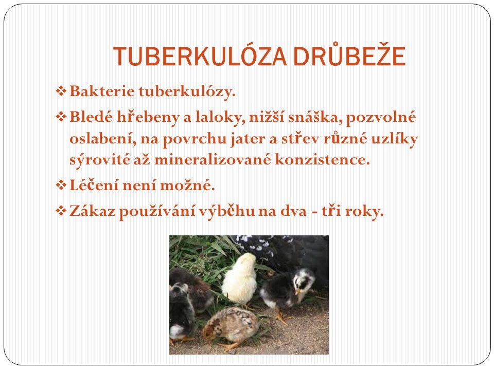 TUBERKULÓZA DRŮBEŽE  Bakterie tuberkulózy.