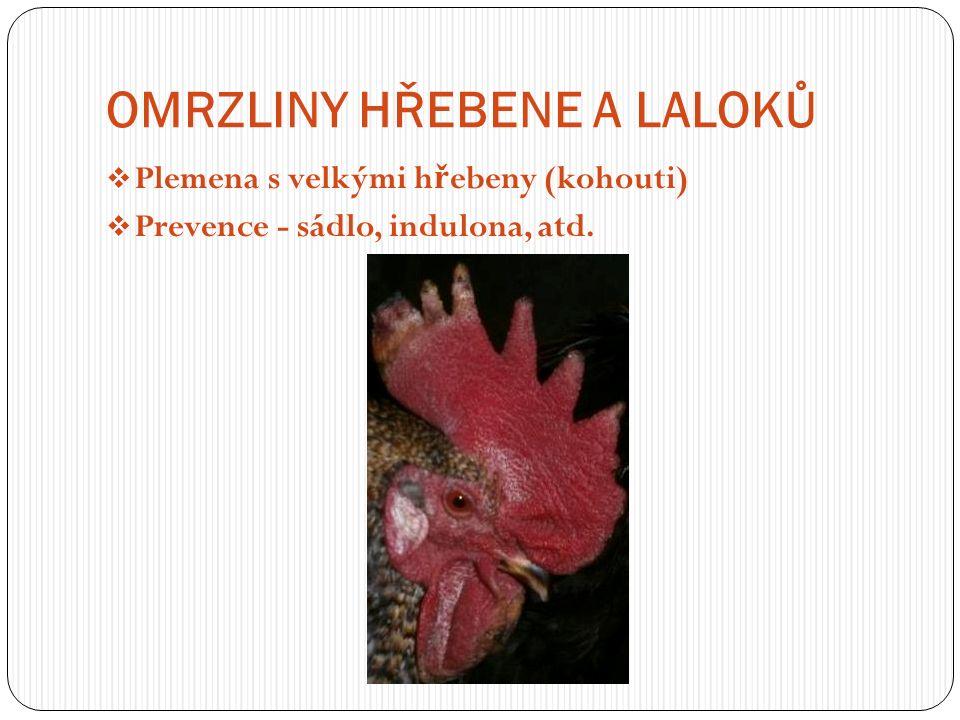 OMRZLINY HŘEBENE A LALOKŮ  Plemena s velkými h ř ebeny (kohouti)  Prevence - sádlo, indulona, atd.