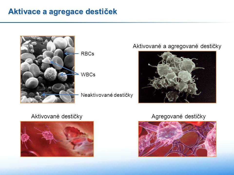 Aktivace a agregace destiček Aktivované a agregované destičky Neaktivované destičky RBCs WBCs Agregované destičky Aktivované destičky