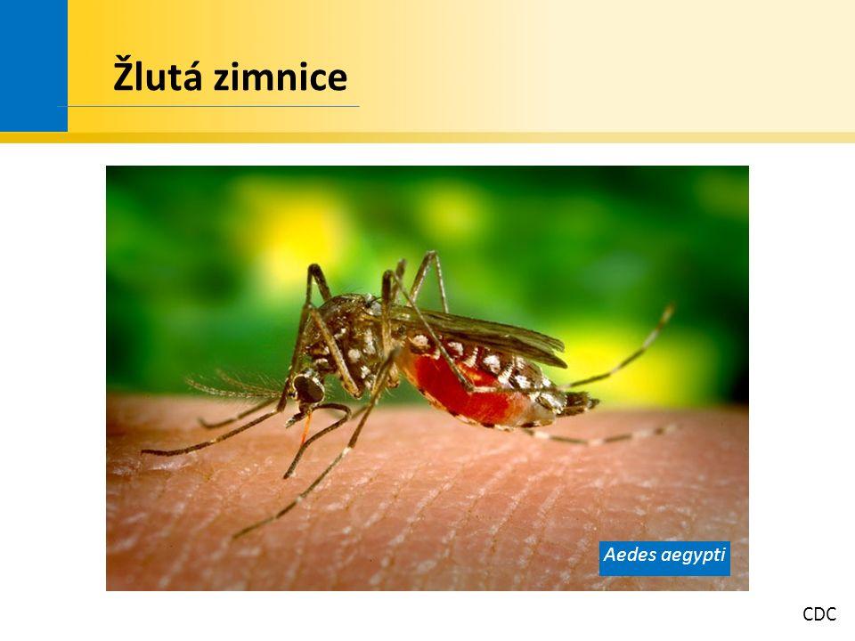 CDC Žlutá zimnice Aedes aegypti