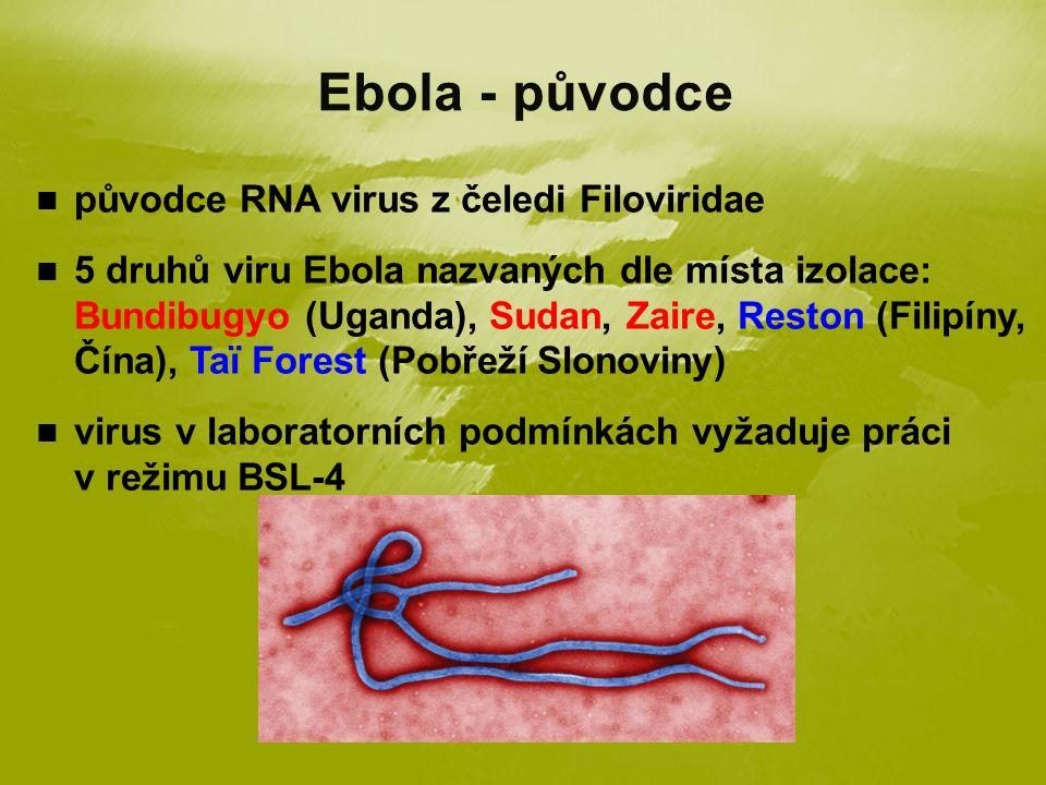 původce RNA virus z čeledi Filoviridae 5 druhů viru Ebola nazvaných dle místa izolace: Bundibugyo (Uganda), Sudan, Zaire, Reston (Filipíny, Čína), Taï Forest (Pobřeží Slonoviny) virus v laboratorních podmínkách vyžaduje práci v režimu BSL-4