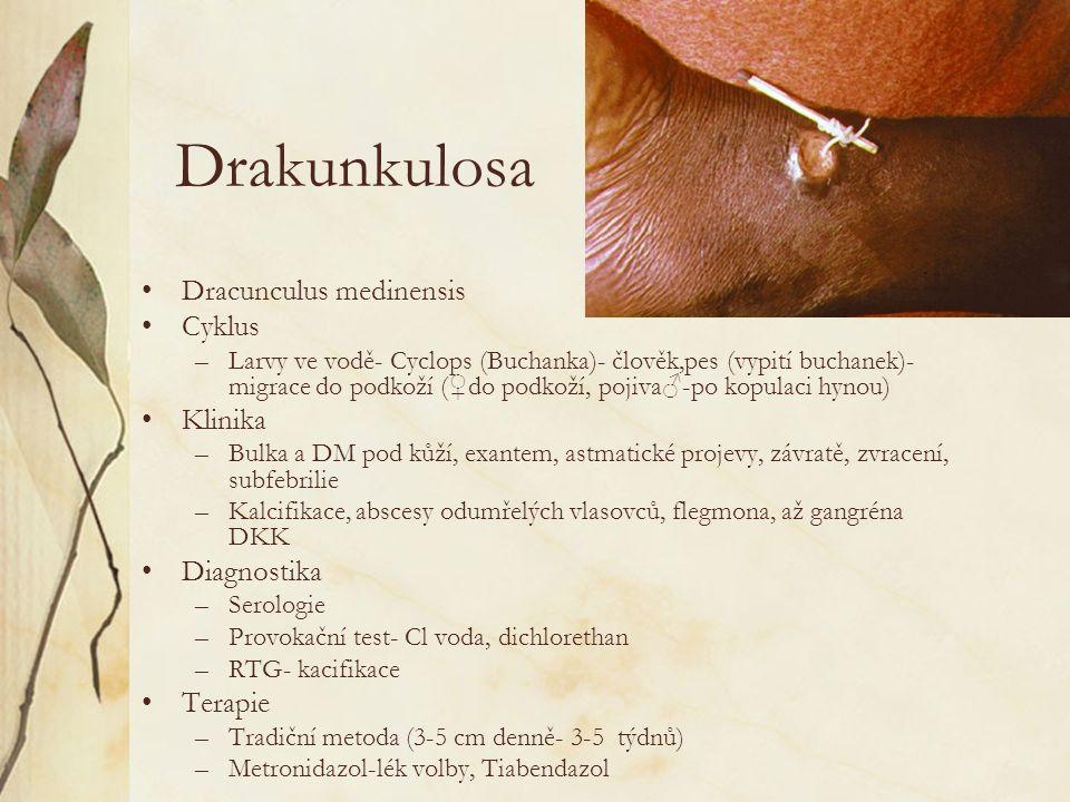 Drakunkulosa Dracunculus medinensis Cyklus –Larvy ve vodě- Cyclops (Buchanka)- člověk,pes (vypití buchanek)- migrace do podkoží ( ♀ do podkoží, pojiva