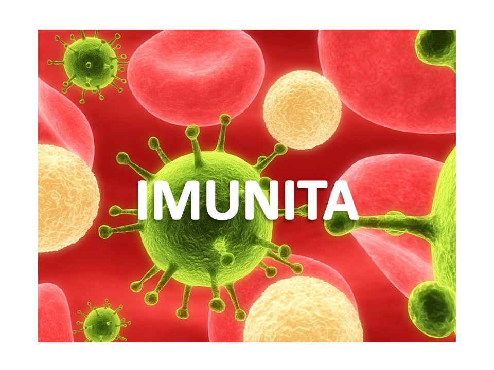 Bílých krvinek Krevních destiček Napadený organismus se brání proti choroboplodným zárodkům hlavně pomocí