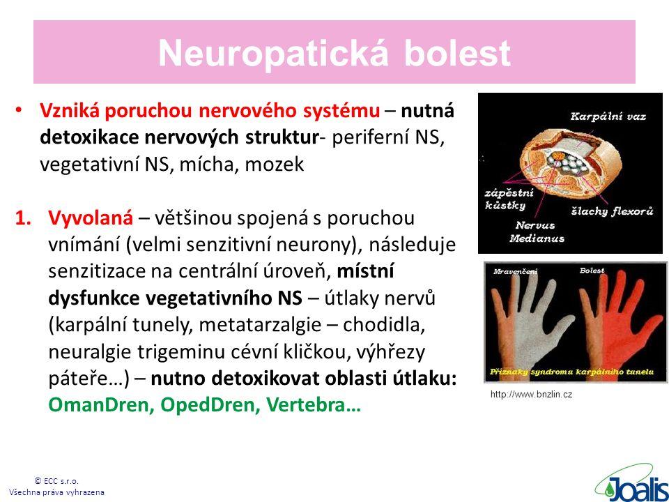 Neuropatická bolest Vzniká poruchou nervového systému – nutná detoxikace nervových struktur- periferní NS, vegetativní NS, mícha, mozek 1.Vyvolaná – většinou spojená s poruchou vnímání (velmi senzitivní neurony), následuje senzitizace na centrální úroveň, místní dysfunkce vegetativního NS – útlaky nervů (karpální tunely, metatarzalgie – chodidla, neuralgie trigeminu cévní kličkou, výhřezy páteře…) – nutno detoxikovat oblasti útlaku: OmanDren, OpedDren, Vertebra… © ECC s.r.o.