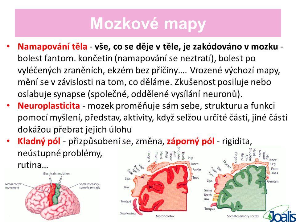Mozkové mapy Namapování těla - vše, co se děje v těle, je zakódováno v mozku - bolest fantom.