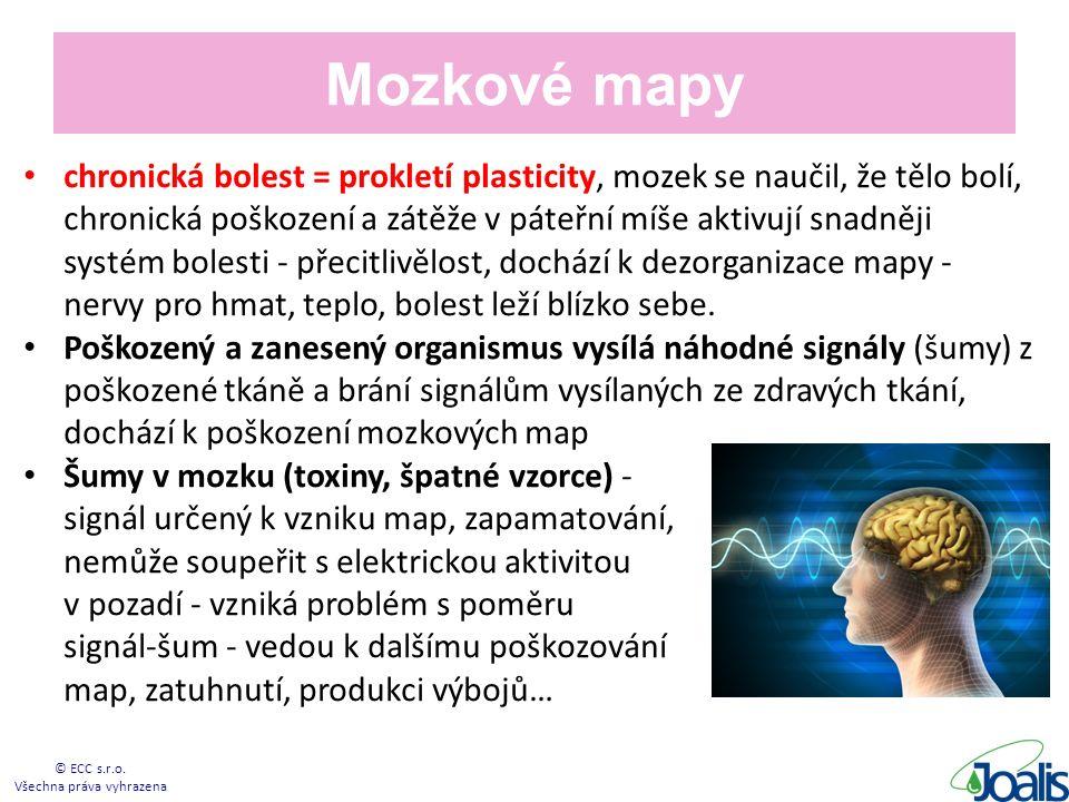 Mozkové mapy chronická bolest = prokletí plasticity, mozek se naučil, že tělo bolí, chronická poškození a zátěže v páteřní míše aktivují snadněji systém bolesti - přecitlivělost, dochází k dezorganizace mapy - nervy pro hmat, teplo, bolest leží blízko sebe.