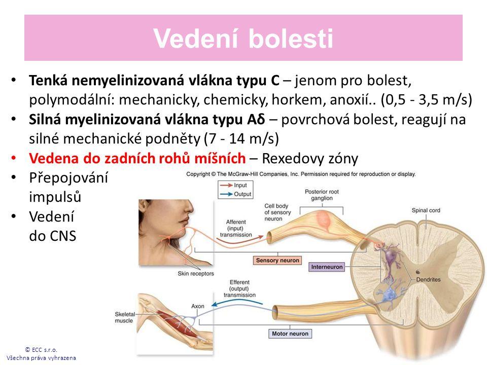 Vedení bolesti Tenká nemyelinizovaná vlákna typu C – jenom pro bolest, polymodální: mechanicky, chemicky, horkem, anoxií..
