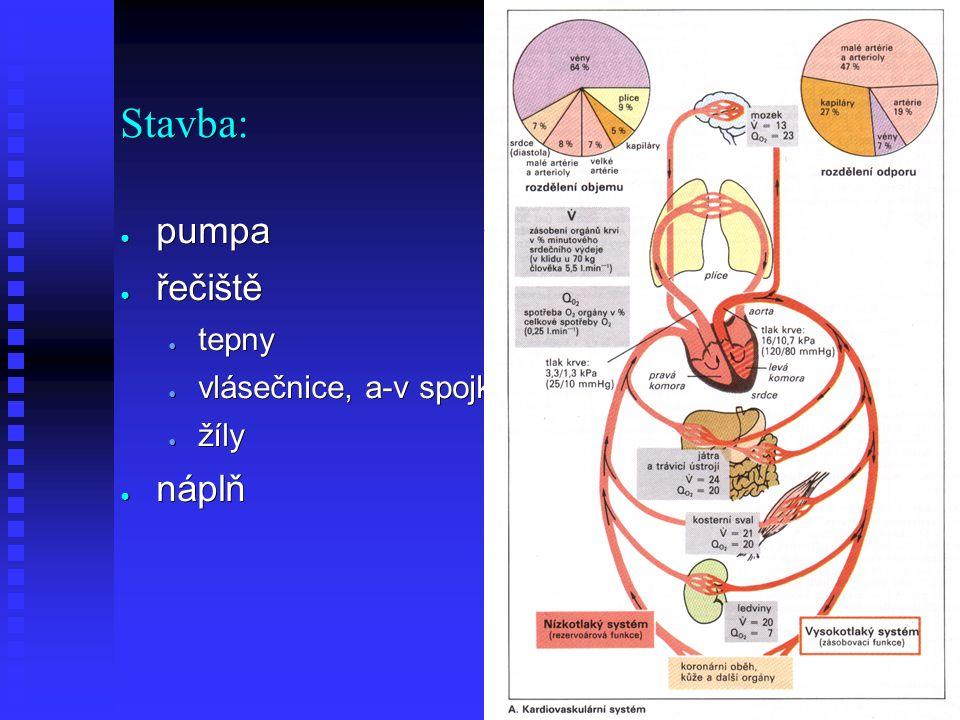 Distribuce krve ● Největší odpor - arterioly - řízení ● Nejmenší odpor - kapiláry ● Největší objem - žilní řečiště ● Nejpomaleji - kapiláry ● Nejrychleji - Aorta
