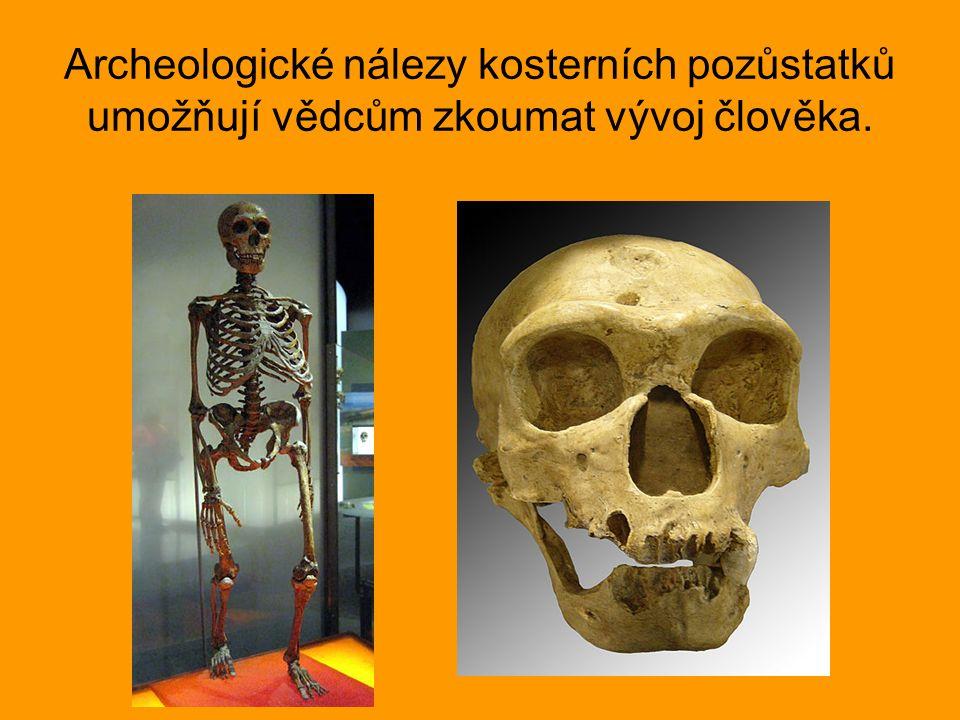 Archeologické nálezy kosterních pozůstatků umožňují vědcům zkoumat vývoj člověka.