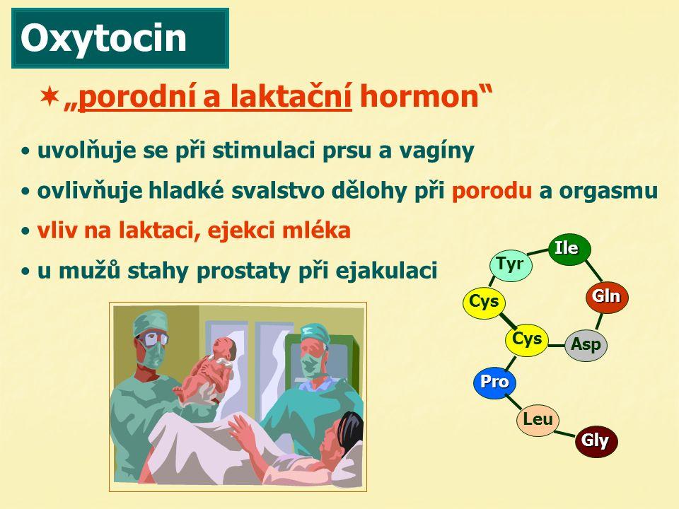 Oxytocin uvolňuje se při stimulaci prsu a vagíny ovlivňuje hladké svalstvo dělohy při porodu a orgasmu vliv na laktaci, ejekci mléka u mužů stahy pros