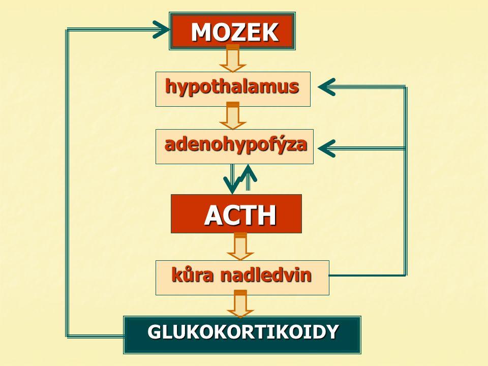 MOZEKhypothalamus kůra nadledvin kůra nadledvin ACTH ACTH adenohypofýza GLUKOKORTIKOIDY GLUKOKORTIKOIDY