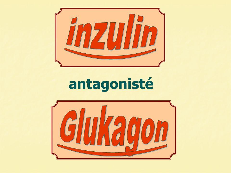  glukózy  hladina glukózy  glukózy  hladina glukózy normální hladina slinivka INZULINGLUKAGON UVOLNĚNÍ glukózy do krve ODEBRÁNÍ glukózy z krve játra buňky