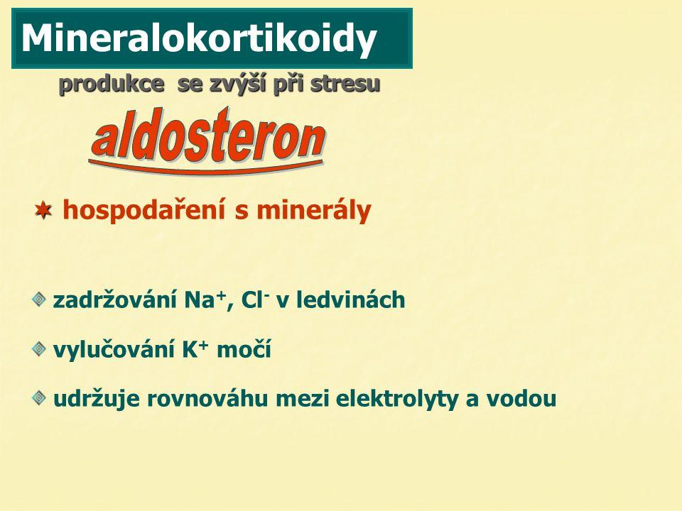 Mineralokortikoidy  hospodaření s minerály produkce se zvýší při stresu zadržování Na +, Cl - v ledvinách vylučování K+ K+ močí udržuje rovnováhu mez