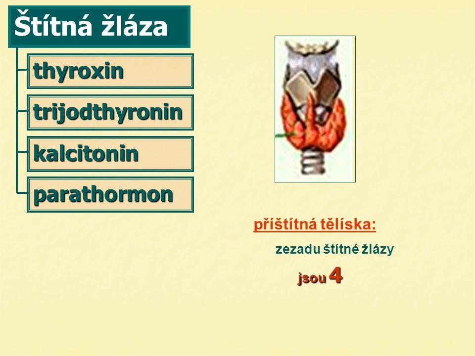 Štítná žláza thyroxin kalcitonin parathormon trijodthyronin jsou 4 příštítná tělíska: zezadu štítné žlázy