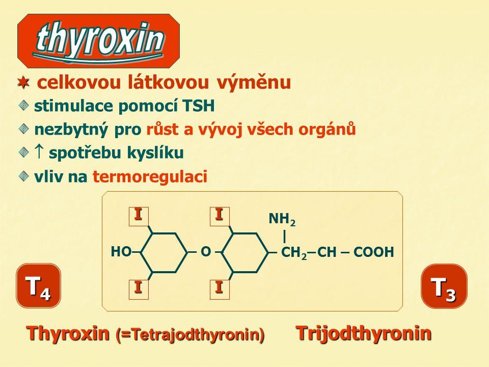  celkovou látkovou výměnu stimulace pomocí TSH nezbytný pro růst a vývoj všech orgánů  spotřebu kyslíku vliv na termoregulaci T4T4T4T4 Trijodthyroni