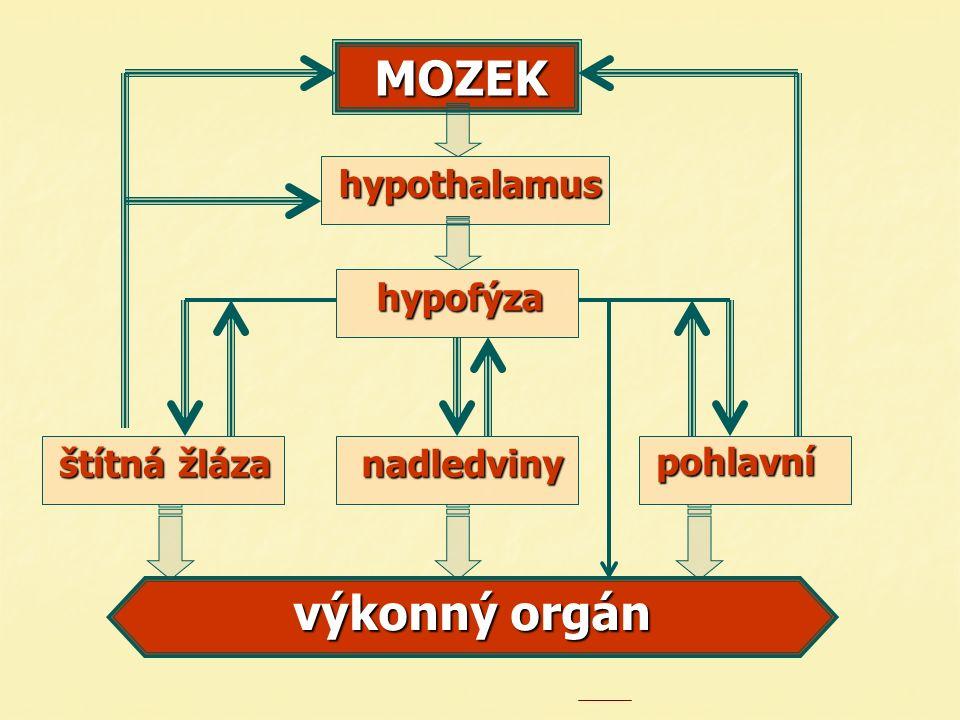 MOZEKhypothalamus štítná žláza pohlavní nadledviny hypofýza výkonný orgán