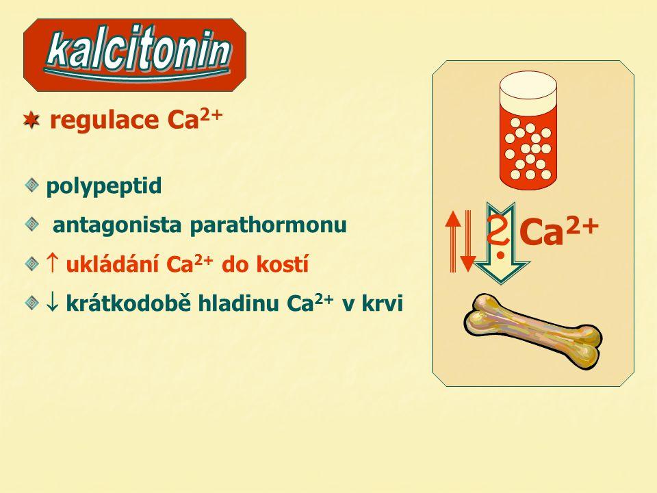  regulace Ca 2+,PO 4 3- příštítná tělíska antagonista kalcitoninu  hladinu Ca 2+ v krvi podporuje vyplavování Ca 2+ z kostí podporuje vstřebávání Ca 2+ ve střevě přímo působí na ledviny: resorpci nebo vylučování nedostatek i nadbytek  nemoc spolupracuje s vitamínem D Ca 2+ polypeptid(29 AMK) 