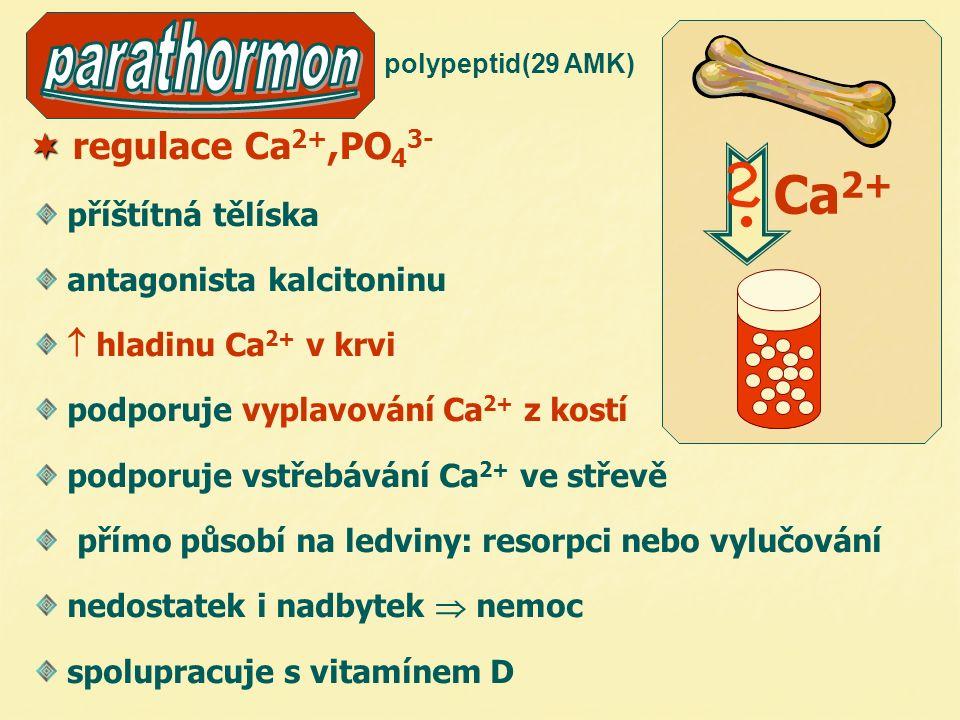  regulace Ca 2+,PO 4 3- příštítná tělíska antagonista kalcitoninu  hladinu Ca 2+ v krvi podporuje vyplavování Ca 2+ z kostí podporuje vstřebávání Ca