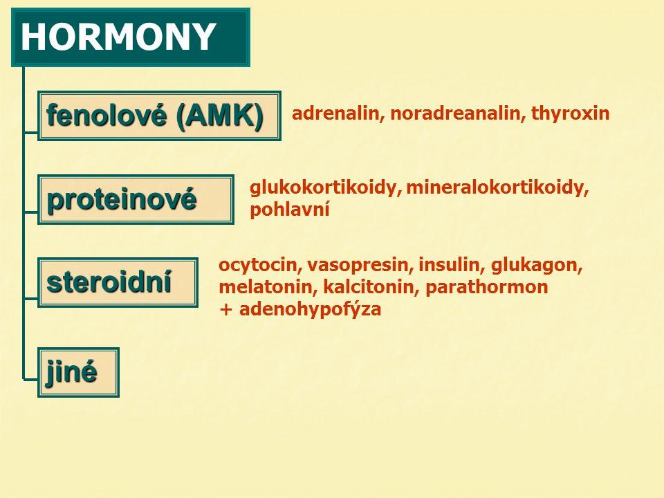 HORMONY fenolové (AMK) proteinové steroidní jiné glukokortikoidy, mineralokortikoidy, pohlavní ocytocin, vasopresin, insulin, glukagon, melatonin, kal