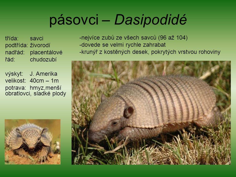 pásovci – Dasipodidé třída: savci podtřída: živorodí nadřád: placentálové řád: chudozubí výskyt: J.