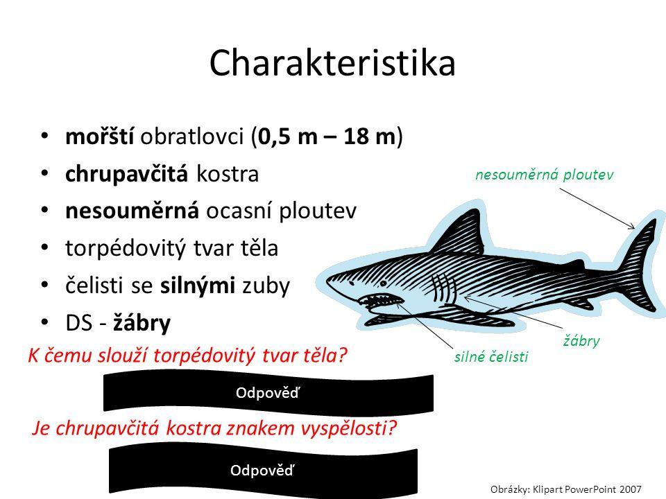 Charakteristika mořští obratlovci (0,5 m – 18 m) chrupavčitá kostra nesouměrná ocasní ploutev torpédovitý tvar těla čelisti se silnými zuby DS - žábry K čemu slouží torpédovitý tvar těla.