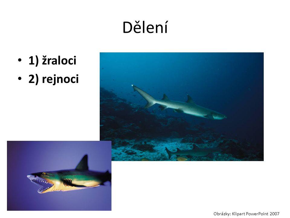 Dělení 1) žraloci 2) rejnoci Obrázky: Klipart PowerPoint 2007
