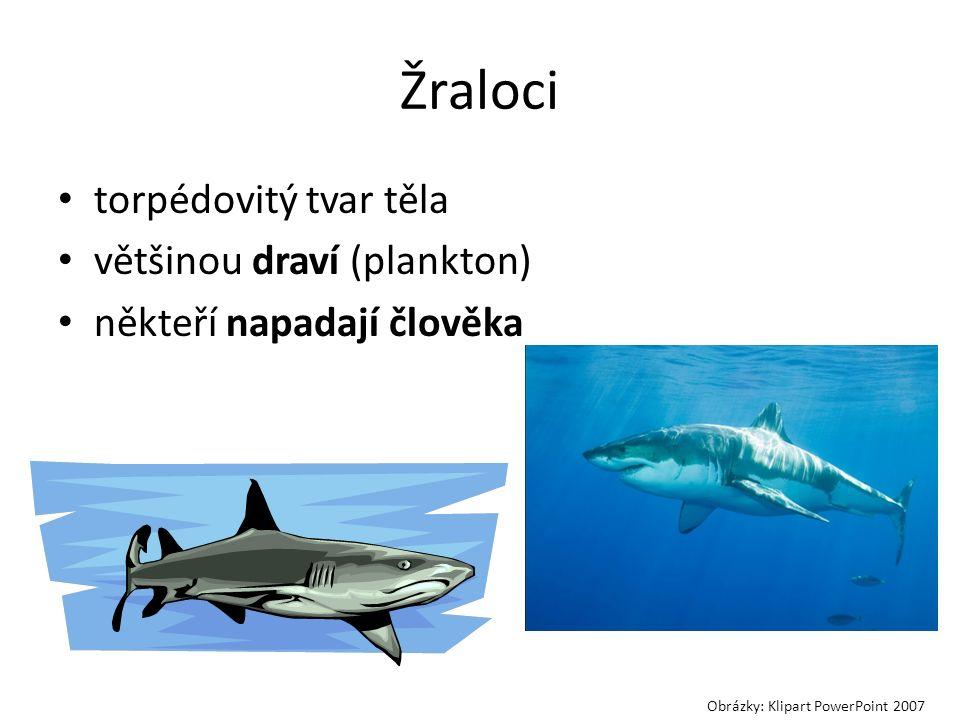 Žraloci torpédovitý tvar těla většinou draví (plankton) někteří napadají člověka Obrázky: Klipart PowerPoint 2007