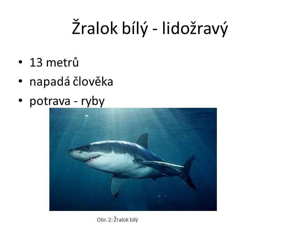 Žralok bílý - lidožravý 13 metrů napadá člověka potrava - ryby Obr. 2: Žralok bílý