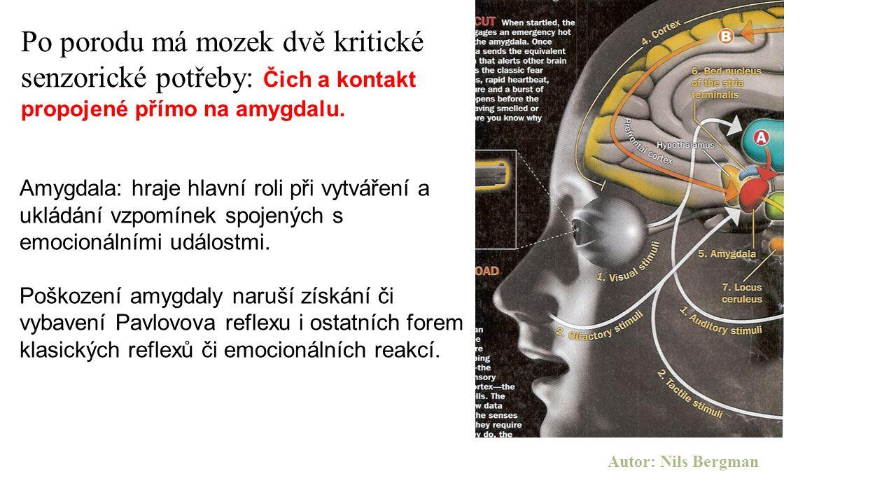 Amygdala: hraje hlavní roli při vytváření a ukládání vzpomínek spojených s emocionálními událostmi. Poškození amygdaly naruší získání či vybavení Pavl