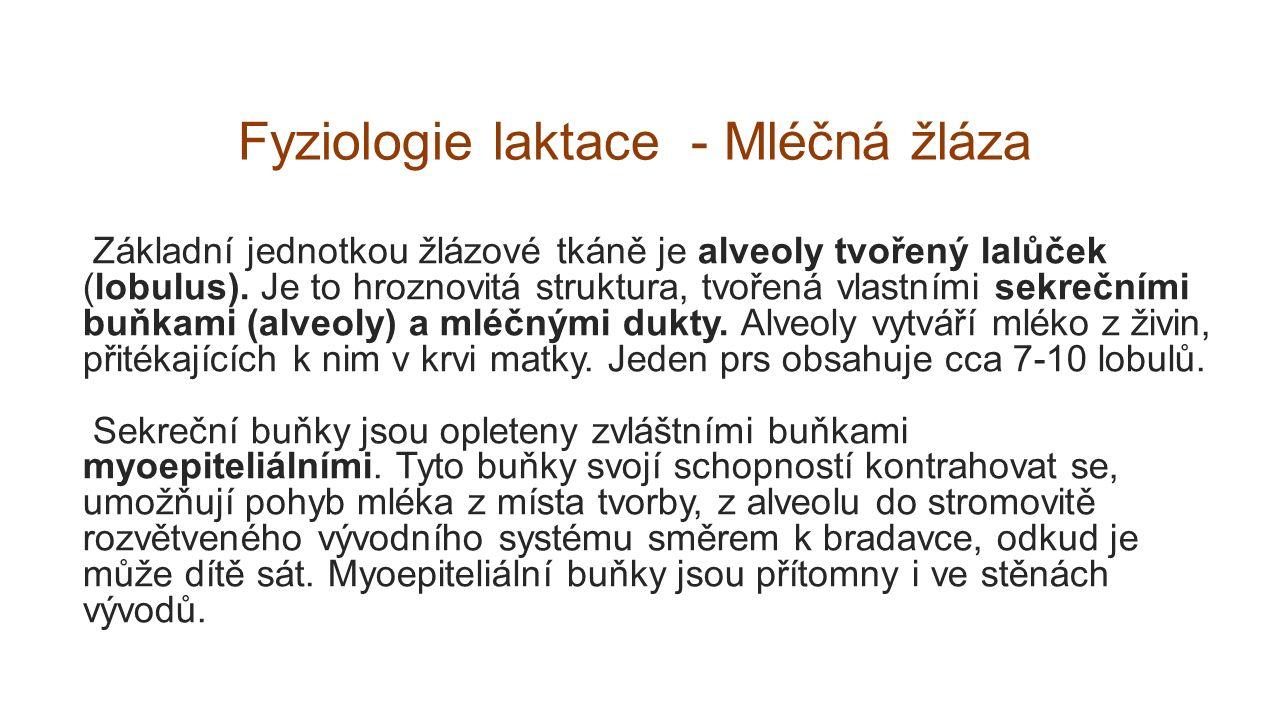 Fyziologie laktace - Mléčná žláza Základní jednotkou žlázové tkáně je alveoly tvořený lalůček (lobulus). Je to hroznovitá struktura, tvořená vlastními