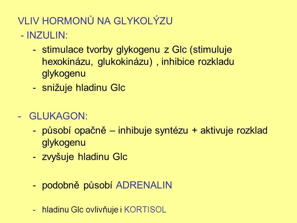 VLIV HORMONŮ NA GLYKOLÝZU - INZULIN: -stimulace tvorby glykogenu z Glc (stimuluje hexokinázu, glukokinázu), inhibice rozkladu glykogenu -snižuje hladi