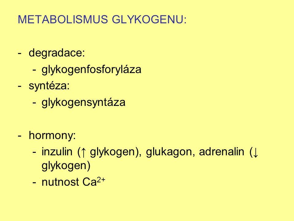 METABOLISMUS GLYKOGENU: -degradace: -glykogenfosforyláza -syntéza: -glykogensyntáza -hormony: -inzulin (↑ glykogen), glukagon, adrenalin (↓ glykogen)