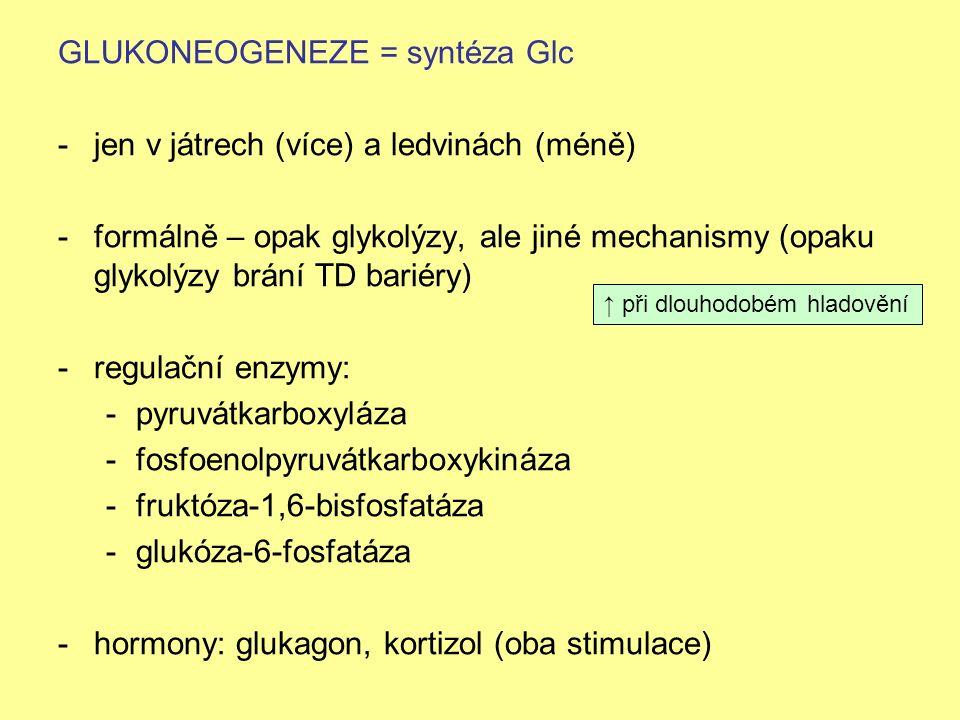 GLUKONEOGENEZE = syntéza Glc -jen v játrech (více) a ledvinách (méně) -formálně – opak glykolýzy, ale jiné mechanismy (opaku glykolýzy brání TD bariér