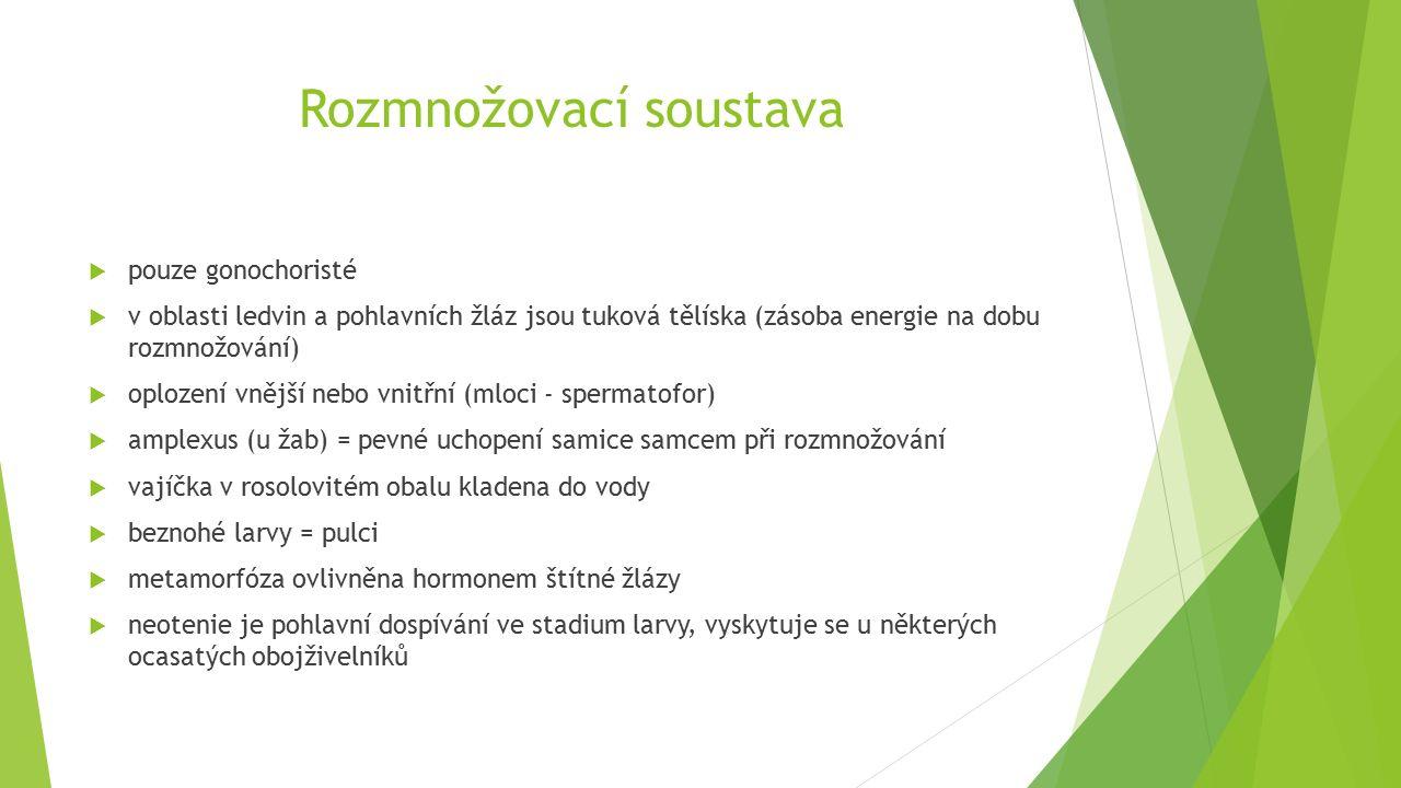 Rozmnožovací soustava  pouze gonochoristé  v oblasti ledvin a pohlavních žláz jsou tuková tělíska (zásoba energie na dobu rozmnožování)  oplození vnější nebo vnitřní (mloci - spermatofor)  amplexus (u žab) = pevné uchopení samice samcem při rozmnožování  vajíčka v rosolovitém obalu kladena do vody  beznohé larvy = pulci  metamorfóza ovlivněna hormonem štítné žlázy  neotenie je pohlavní dospívání ve stadium larvy, vyskytuje se u některých ocasatých obojživelníků